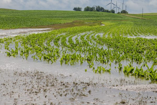 crops ruined by water damage
