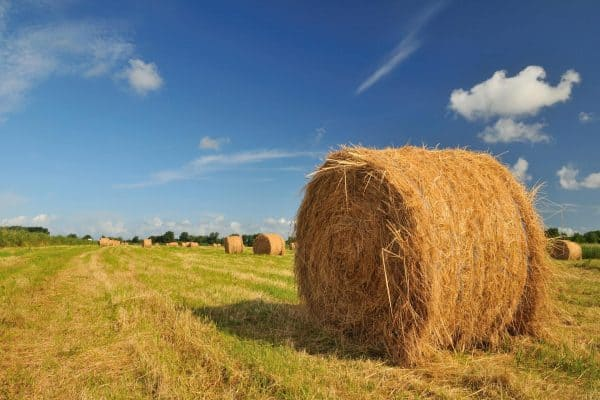 large piles of hay on field