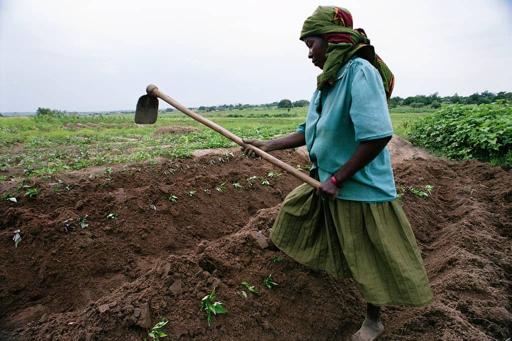 African woman farming by herself