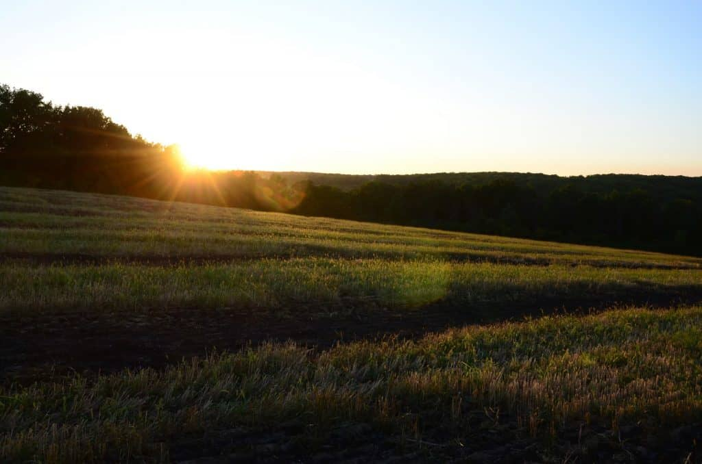 The sun sets over a field of crops
