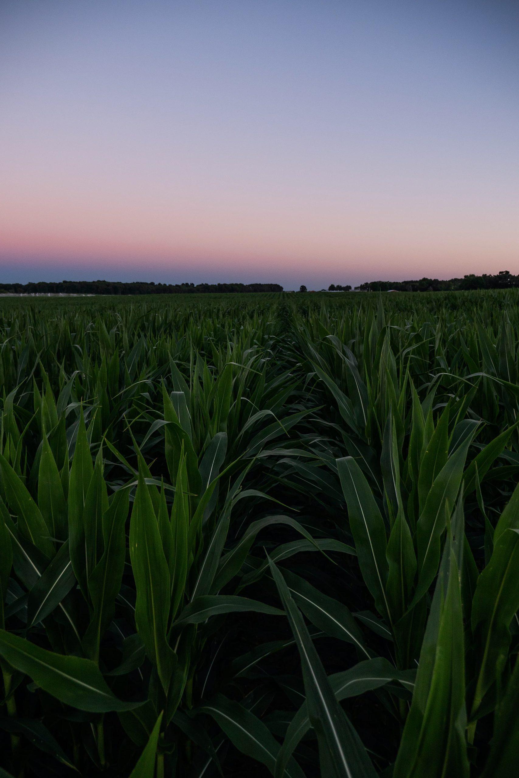 Farmland AFIDA